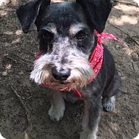 Adopt A Pet :: Sparky - Flower Mound, TX