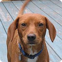 Adopt A Pet :: Rusty in Pembroke, MA! - Braintree, MA