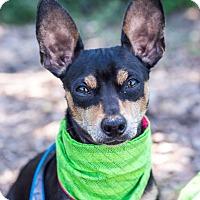 Adopt A Pet :: Henry - Calgary, AB
