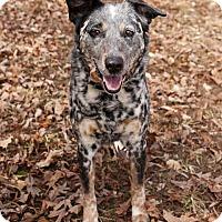 Adopt A Pet :: Riggs - Richmond, VA