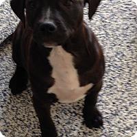 Adopt A Pet :: Hunter - Washington, PA