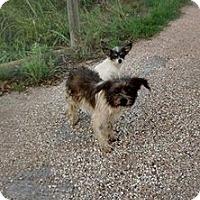 Adopt A Pet :: Jack and Jill - Buchanan Dam, TX