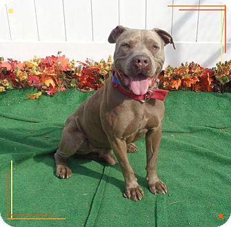Pit Bull Terrier Mix Dog for adoption in Marietta, Georgia - DIEGO