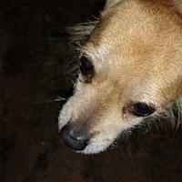 Adopt A Pet :: Chuey - Disney, OK