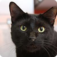 Adopt A Pet :: Bishop - Sarasota, FL