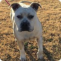 Adopt A Pet :: Zeus - Kingman, KS