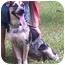 Photo 2 - Australian Cattle Dog Mix Dog for adoption in Little River, South Carolina - Moon