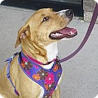 Adopt A Pet :: Sadie Kiss Kiss - Scottsdale, AZ