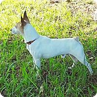 Adopt A Pet :: Mr Mack - Miami, FL