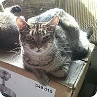 Adopt A Pet :: Taz - Hampton, CT