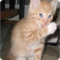 Adopt A Pet :: Jackies Male - Cincinnati, OH