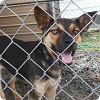 Adopt A Pet :: JT - Somers, CT