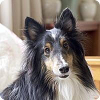 Adopt A Pet :: Alber - San Diego, CA