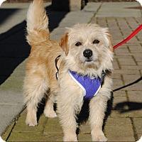Adopt A Pet :: Baxter - Adoption Pending - Gig Harbor, WA