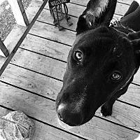 Adopt A Pet :: SOBI - grants pass, OR