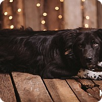 Adopt A Pet :: Tripp - Portland, OR