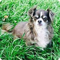 Adopt A Pet :: Mickey - Osseo, MN
