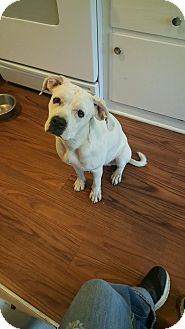 Boxer Mix Dog for adoption in Sharon Center, Ohio - Lady - PENDING