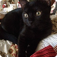 Adopt A Pet :: Dippy (1/2 price adoptions!) - New Smyrna Beach, FL