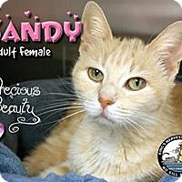 Adopt A Pet :: Sandy - Davenport, IA