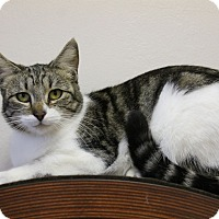 Adopt A Pet :: Jasmine - Fountain Hills, AZ