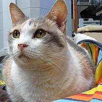 Adopt A Pet :: Candy - San Carlos, CA