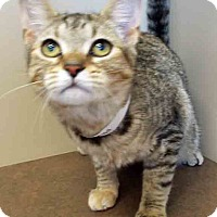 Adopt A Pet :: ADOPTED!!!   Ethel - Oswego, IL