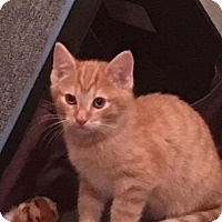 Adopt A Pet :: Moscato - Mount Laurel, NJ