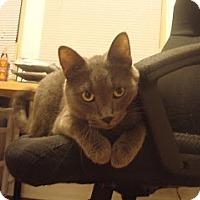 Adopt A Pet :: Kio - Chicago, IL