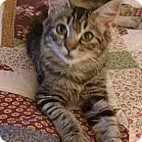 Adopt A Pet :: Desi - Morgan Hill, CA