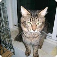 Adopt A Pet :: Silvester - Etobicoke, ON