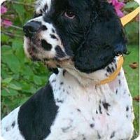 Adopt A Pet :: Lisa - Sugarland, TX