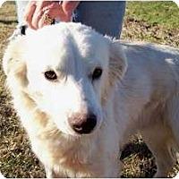 Adopt A Pet :: Baxter - Glastonbury, CT