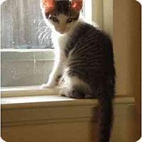 Adopt A Pet :: Mellow Fellow - Davis, CA
