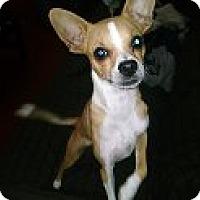 Adopt A Pet :: Jaxon - Gilbert, AZ