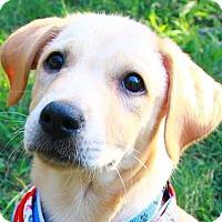 Adopt A Pet :: Kainny - Temple City, CA