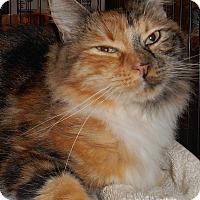 Adopt A Pet :: Athena - Chattanooga, TN