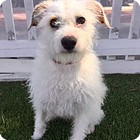 Adopt A Pet :: Weston (BH) - Santa Ana, CA
