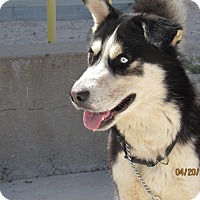 Adopt A Pet :: Prince - Denver, CO
