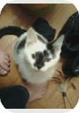 Domestic Longhair Kitten for adoption in Clay, New York - SCOTTY&CALLIE