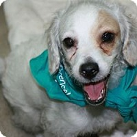 Adopt A Pet :: Sherman - Canoga Park, CA