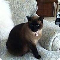 Adopt A Pet :: COCO - Phoenix, AZ