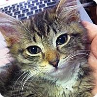 Adopt A Pet :: Freeze Tag - Brooklyn, NY