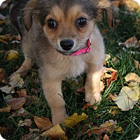 Adopt A Pet :: Chucky - Broomfield, CO