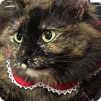 Adopt A Pet :: Clarity - Harrisburg, NC