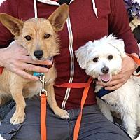 Adopt A Pet :: *URGENT* Jane & Gio - Van Nuys, CA
