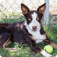 Adopt A Pet :: Alana - Patterson, CA