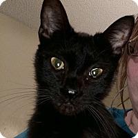 Adopt A Pet :: Stringbean - Kingsport, TN