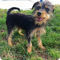 Adopt A Pet :: Asher - Mission Viejo, CA