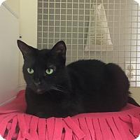Adopt A Pet :: Leila - Cerritos, CA